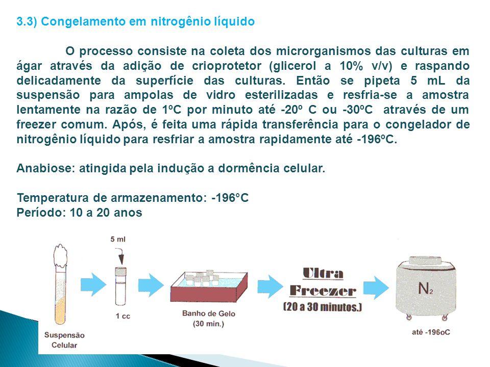3.3) Congelamento em nitrogênio líquido O processo consiste na coleta dos microrganismos das culturas em ágar através da adição de crioprotetor (glice