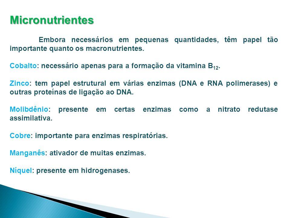 Micronutrientes Embora necessários em pequenas quantidades, têm papel tão importante quanto os macronutrientes. Cobalto: necessário apenas para a form