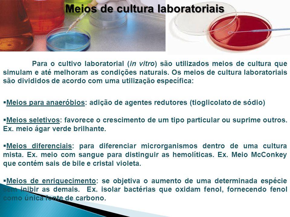 Meios de cultura laboratoriais Para o cultivo laboratorial (in vitro) são utilizados meios de cultura que simulam e até melhoram as condições naturais