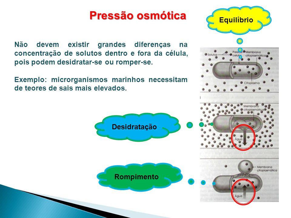 Pressão osmótica Não devem existir grandes diferenças na concentração de solutos dentro e fora da célula, pois podem desidratar-se ou romper-se. Exemp