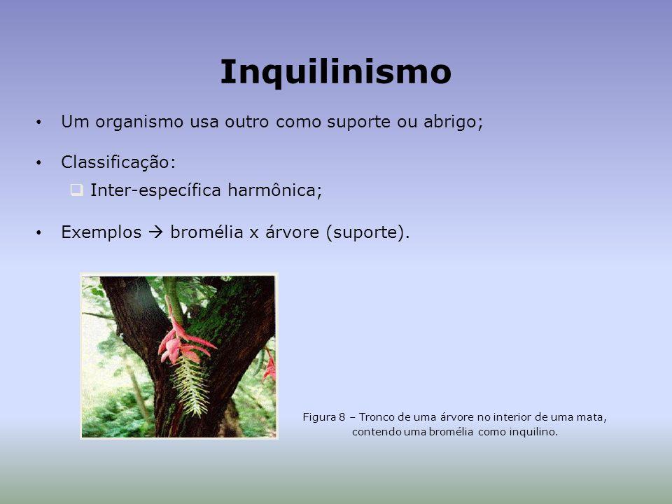 Inquilinismo Um organismo usa outro como suporte ou abrigo; Classificação: Inter-específica harmônica; Exemplos bromélia x árvore (suporte).