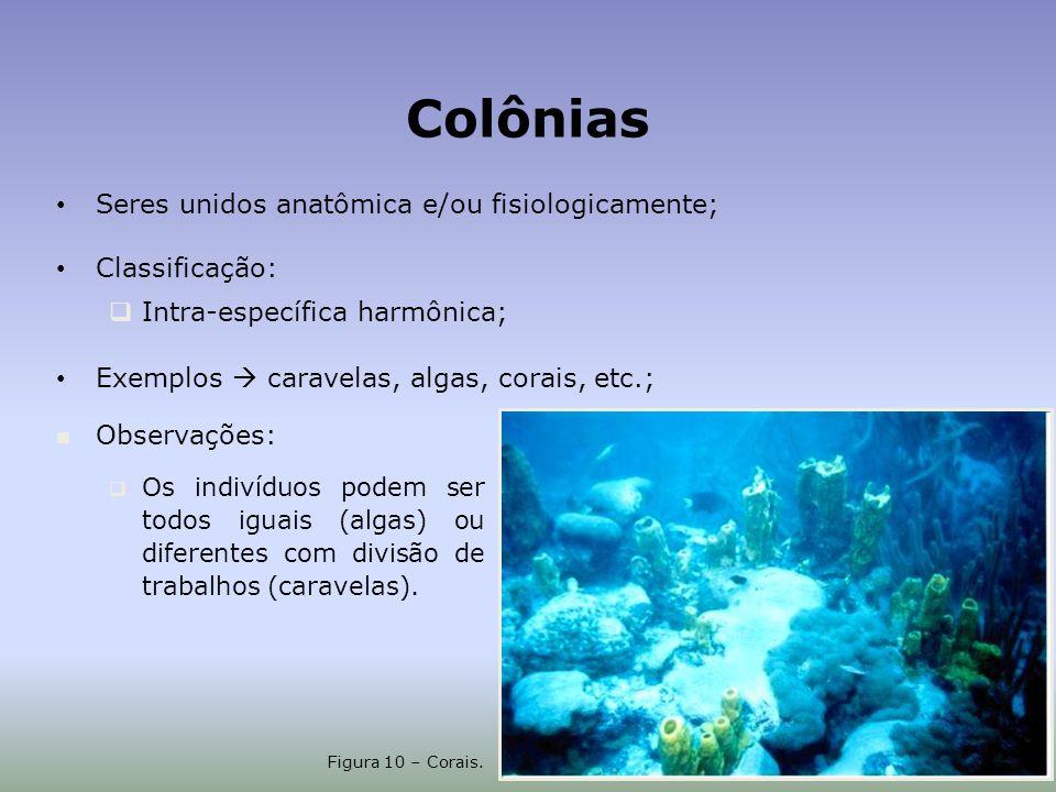 Colônias Seres unidos anatômica e/ou fisiologicamente; Classificação: Intra-específica harmônica; Exemplos caravelas, algas, corais, etc.; Figura 10 – Corais.
