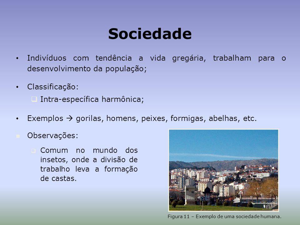 Sociedade Indivíduos com tendência a vida gregária, trabalham para o desenvolvimento da população; Classificação: Intra-específica harmônica; Exemplos gorilas, homens, peixes, formigas, abelhas, etc.