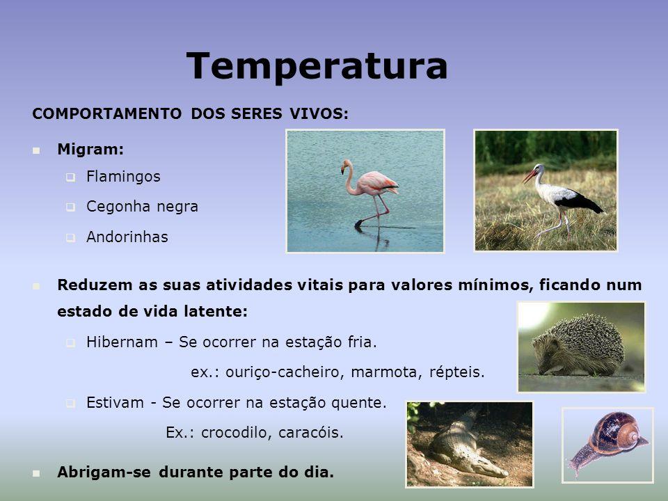 Temperatura COMPORTAMENTO DOS SERES VIVOS: Migram: Flamingos Cegonha negra Andorinhas Reduzem as suas atividades vitais para valores mínimos, ficando num estado de vida latente: Hibernam – Se ocorrer na estação fria.