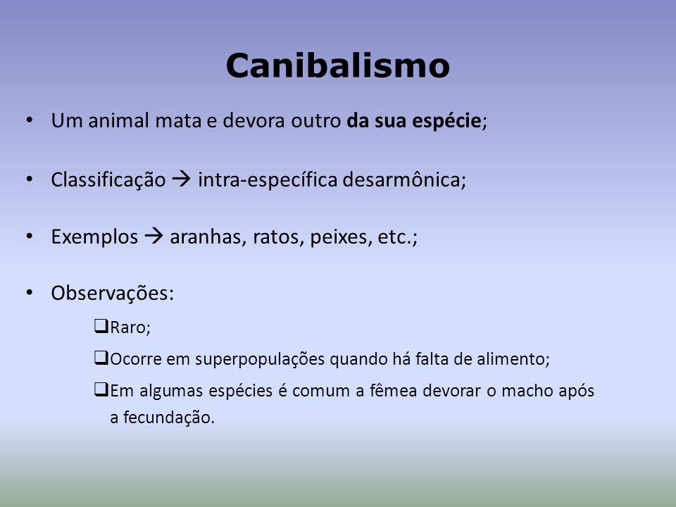 Canibalismo Um animal mata e devora outro da sua espécie; Classificação intra-específica desarmônica; Exemplos aranhas, ratos, peixes, etc.; Observações: Raro; Ocorre em superpopulações quando há falta de alimento; Em algumas espécies é comum a fêmea devorar o macho após a fecundação.