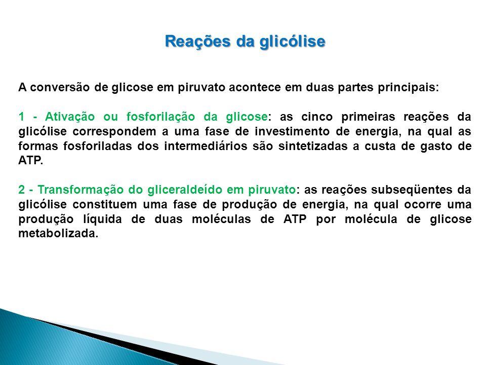 Reações da glicólise A conversão de glicose em piruvato acontece em duas partes principais: 1 - Ativação ou fosforilação da glicose: as cinco primeira