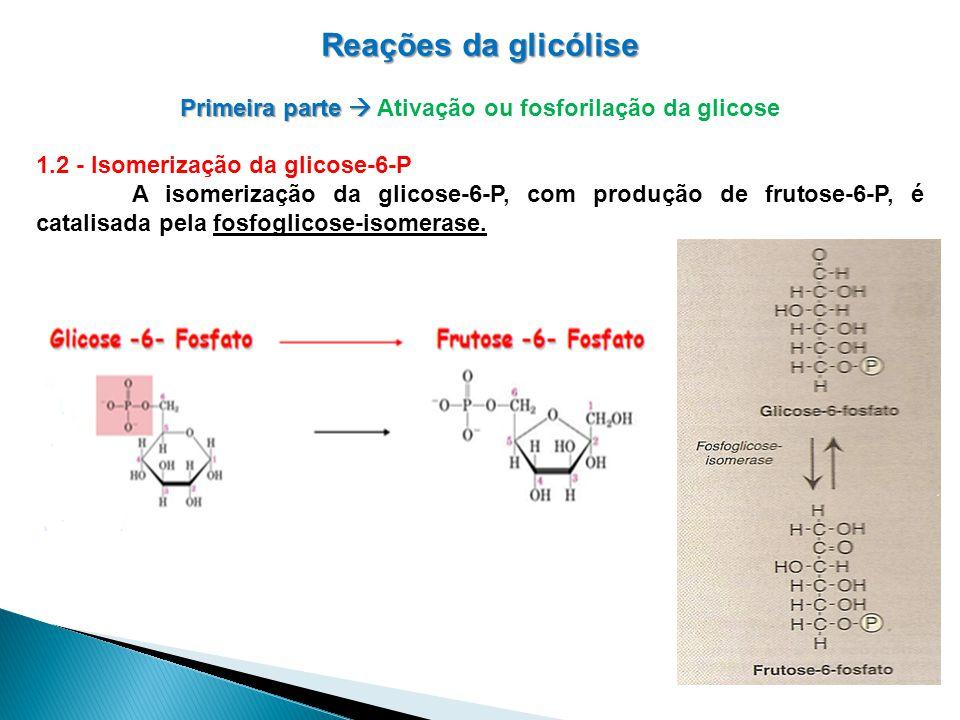 Reações da glicólise Primeira parte Primeira parte Ativação ou fosforilação da glicose 1.2 - Isomerização da glicose-6-P A isomerização da glicose-6-P, com produção de frutose-6-P, é catalisada pela fosfoglicose-isomerase.