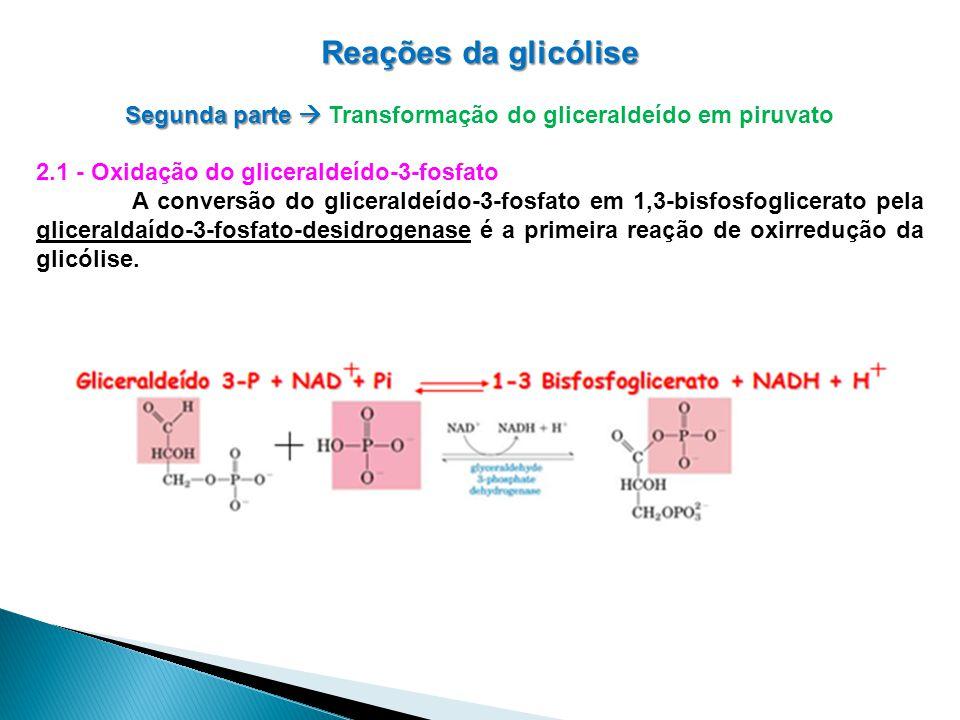 Reações da glicólise Segunda parte Segunda parte Transformação do gliceraldeído em piruvato 2.1 - Oxidação do gliceraldeído-3-fosfato A conversão do gliceraldeído-3-fosfato em 1,3-bisfosfoglicerato pela gliceraldaído-3-fosfato-desidrogenase é a primeira reação de oxirredução da glicólise.