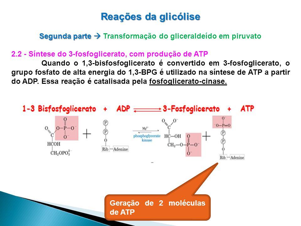 Reações da glicólise Segunda parte Segunda parte Transformação do gliceraldeído em piruvato 2.2 - Síntese do 3-fosfoglicerato, com produção de ATP Quando o 1,3-bisfosfoglicerato é convertido em 3-fosfoglicerato, o grupo fosfato de alta energia do 1,3-BPG é utilizado na síntese de ATP a partir do ADP.