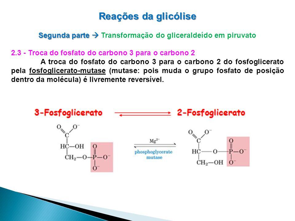 Reações da glicólise Segunda parte Segunda parte Transformação do gliceraldeído em piruvato 2.3 - Troca do fosfato do carbono 3 para o carbono 2 A troca do fosfato do carbono 3 para o carbono 2 do fosfoglicerato pela fosfoglicerato-mutase (mutase: pois muda o grupo fosfato de posição dentro da molécula) é livremente reversível.