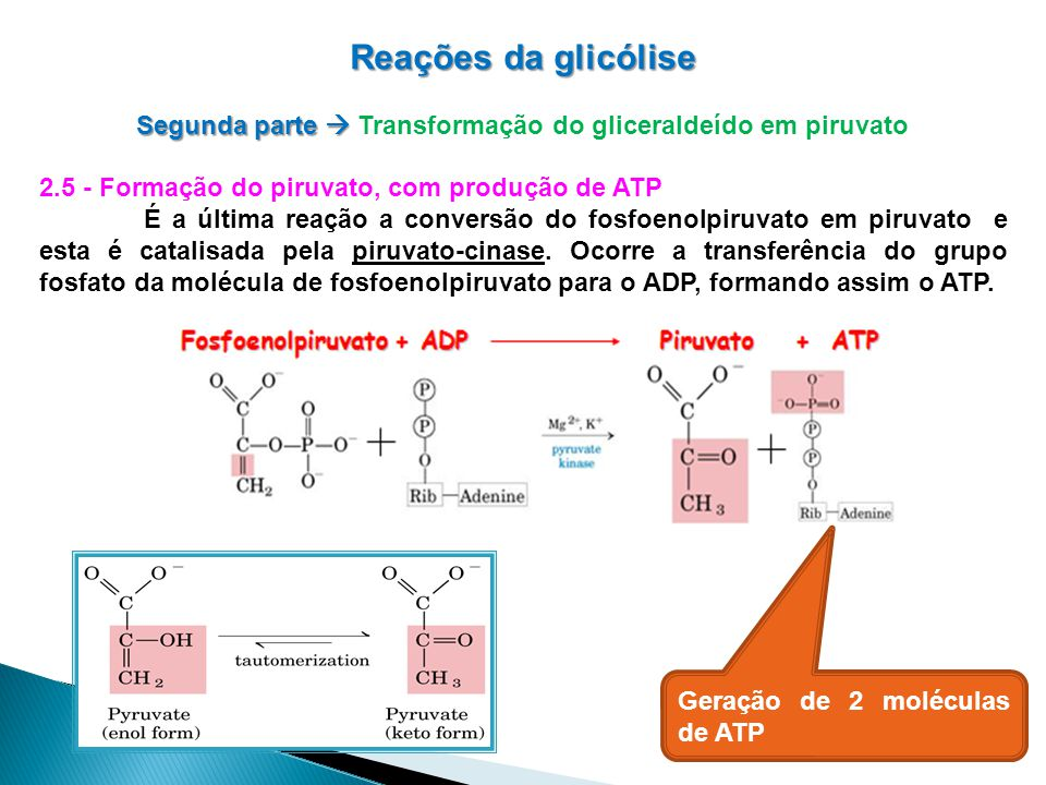 Reações da glicólise Segunda parte Segunda parte Transformação do gliceraldeído em piruvato 2.5 - Formação do piruvato, com produção de ATP É a última reação a conversão do fosfoenolpiruvato em piruvato e esta é catalisada pela piruvato-cinase.