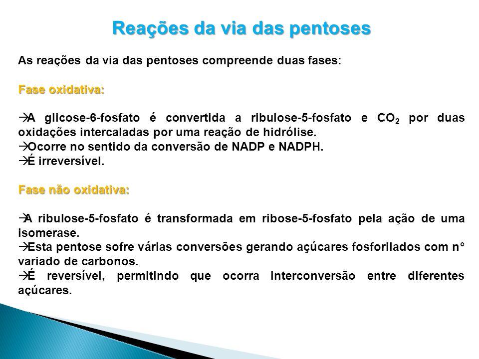 Reações da via das pentoses As reações da via das pentoses compreende duas fases: Fase oxidativa: A glicose-6-fosfato é convertida a ribulose-5-fosfat