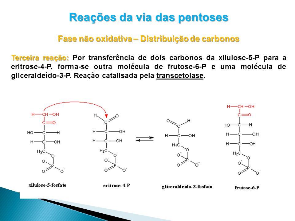 Reações da via das pentoses Fase não oxidativa – Distribuição de carbonos Terceira reação: Terceira reação: Por transferência de dois carbonos da xilulose-5-P para a eritrose-4-P, forma-se outra molécula de frutose-6-P e uma molécula de gliceraldeído-3-P.