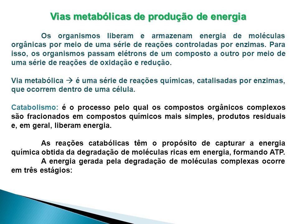 Vias metabólicas de produção de energia Os organismos liberam e armazenam energia de moléculas orgânicas por meio de uma série de reações controladas