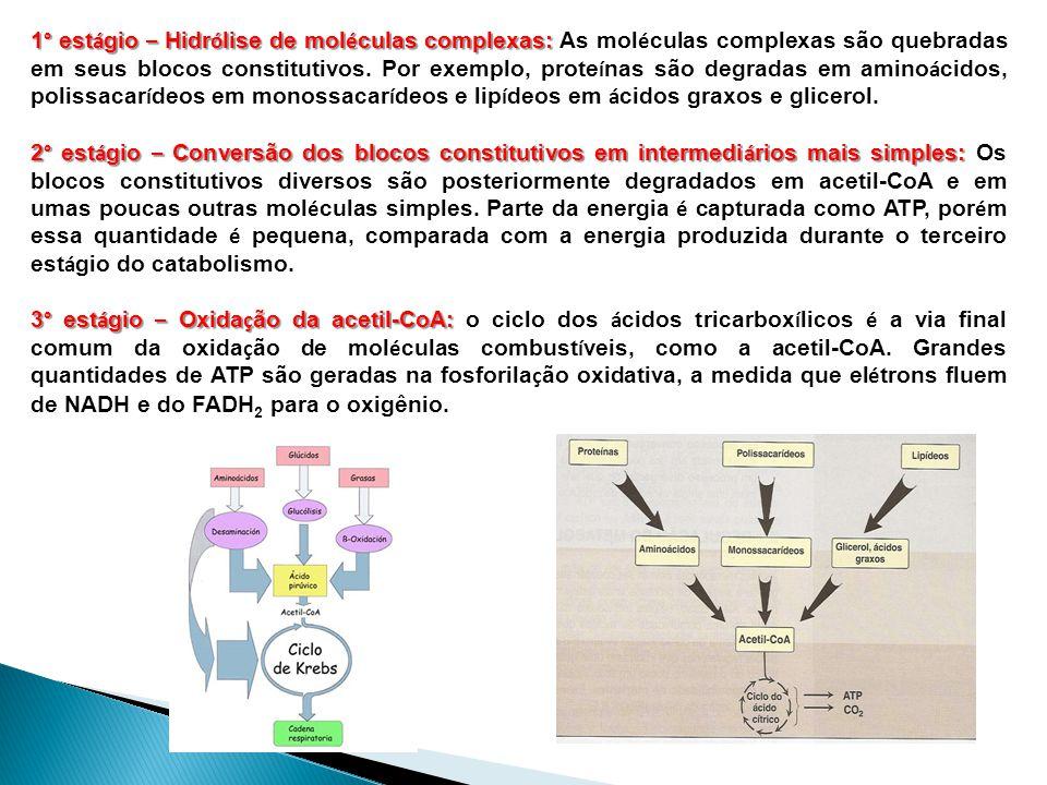 1° est á gio – Hidr ó lise de mol é culas complexas: 1° est á gio – Hidr ó lise de mol é culas complexas: As mol é culas complexas são quebradas em seus blocos constitutivos.