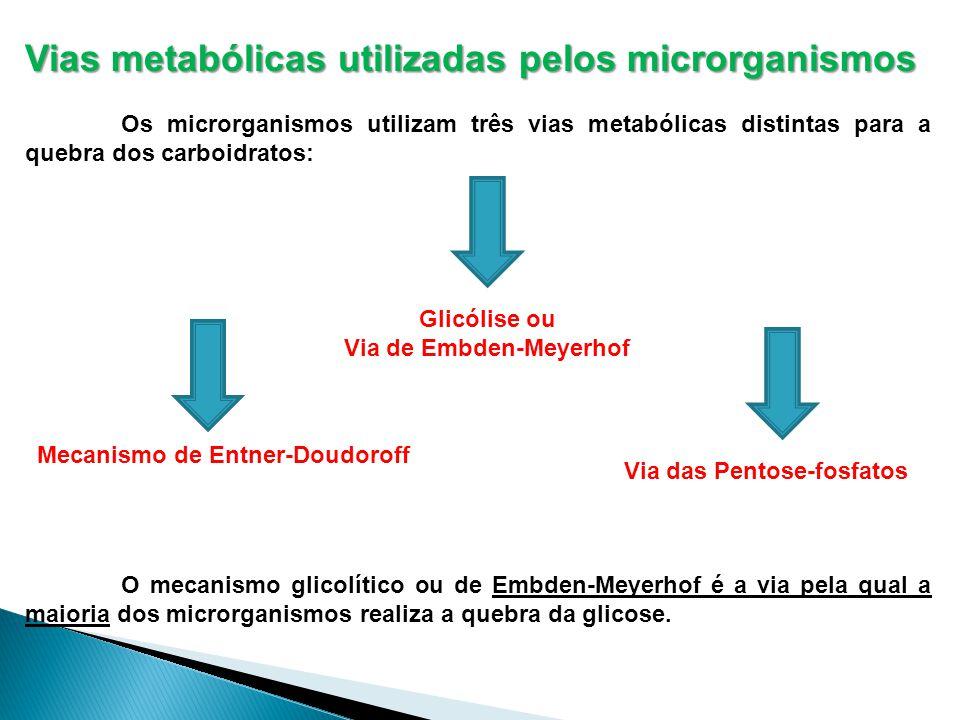 Vias metabólicas utilizadas pelos microrganismos Os microrganismos utilizam três vias metabólicas distintas para a quebra dos carboidratos: O mecanismo glicolítico ou de Embden-Meyerhof é a via pela qual a maioria dos microrganismos realiza a quebra da glicose.