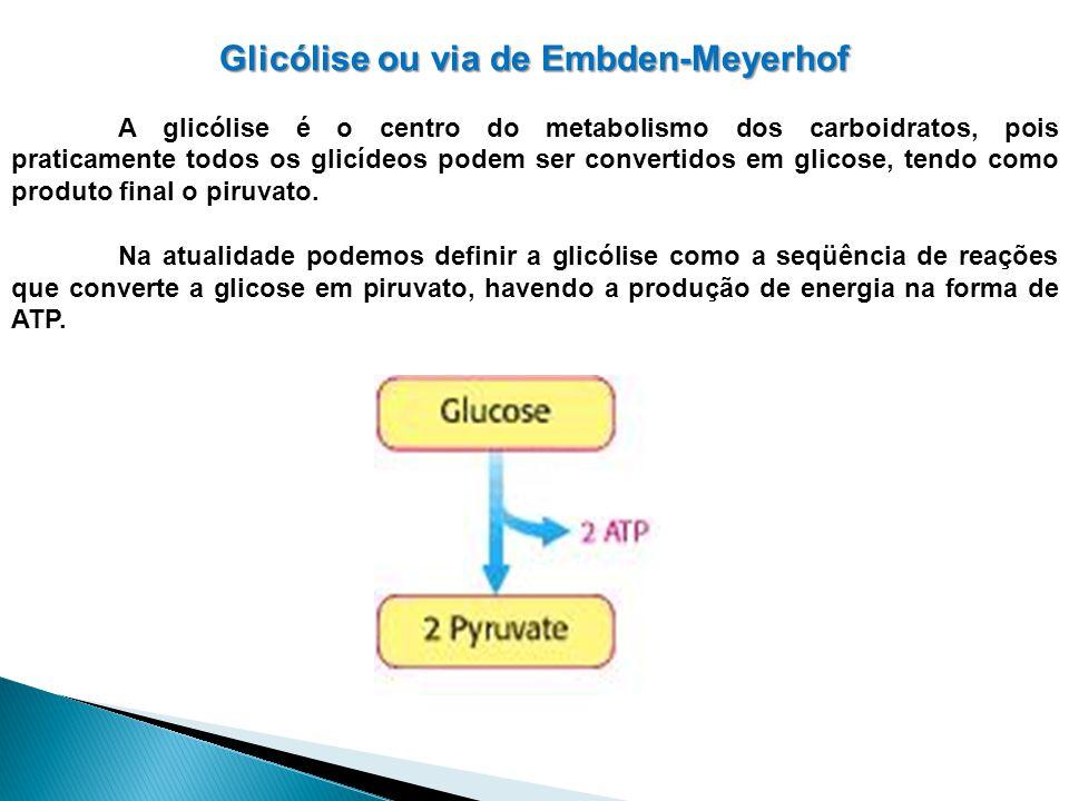 Glicólise ou via de Embden-Meyerhof A glicólise é o centro do metabolismo dos carboidratos, pois praticamente todos os glicídeos podem ser convertidos