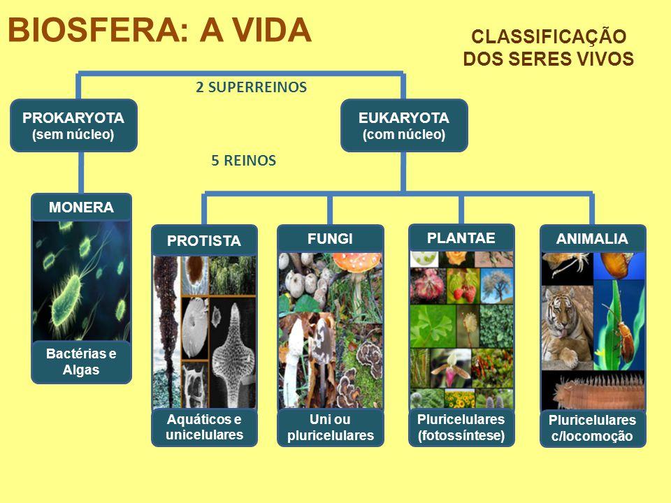 BIOSFERA: A VIDA MONERA Bactérias e Algas FUNGI Uni ou pluricelulares Aquáticos e unicelulares PROTISTA PLANTAE Pluricelulares (fotossíntese) ANIMALIA