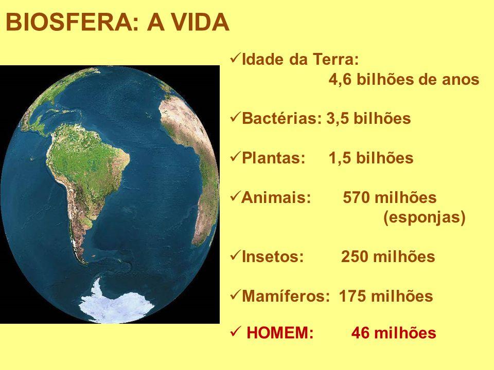 Idade da Terra: 4,6 bilhões de anos Bactérias: 3,5 bilhões Plantas: 1,5 bilhões Animais: 570 milhões (esponjas) Insetos: 250 milhões Mamíferos: 175 mi