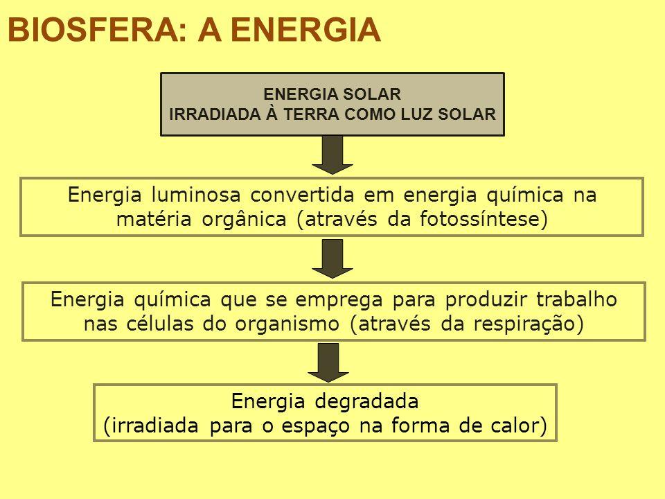 BIOSFERA: A ENERGIA ENERGIA SOLAR IRRADIADA À TERRA COMO LUZ SOLAR Energia luminosa convertida em energia química na matéria orgânica (através da foto