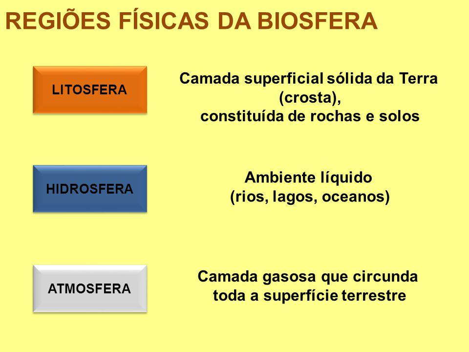 BIOSFERA: A VIDA MONERA Bactérias e Algas FUNGI Uni ou pluricelulares Aquáticos e unicelulares PROTISTA PLANTAE Pluricelulares (fotossíntese) ANIMALIA Pluricelulares c/locomoção PROKARYOTA (sem núcleo) EUKARYOTA (com núcleo) 2 SUPERREINOS 5 REINOS CLASSIFICAÇÃO DOS SERES VIVOS