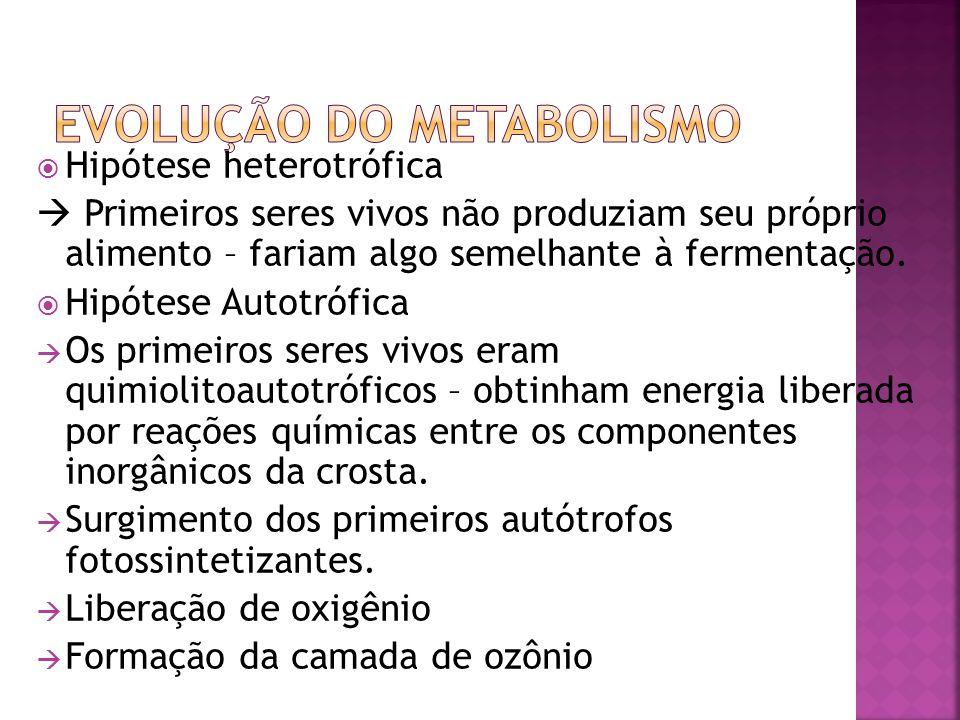 Célula procariótica. Célula eucariótica Hipótese autogênica. Hipótese endossimbiótica.