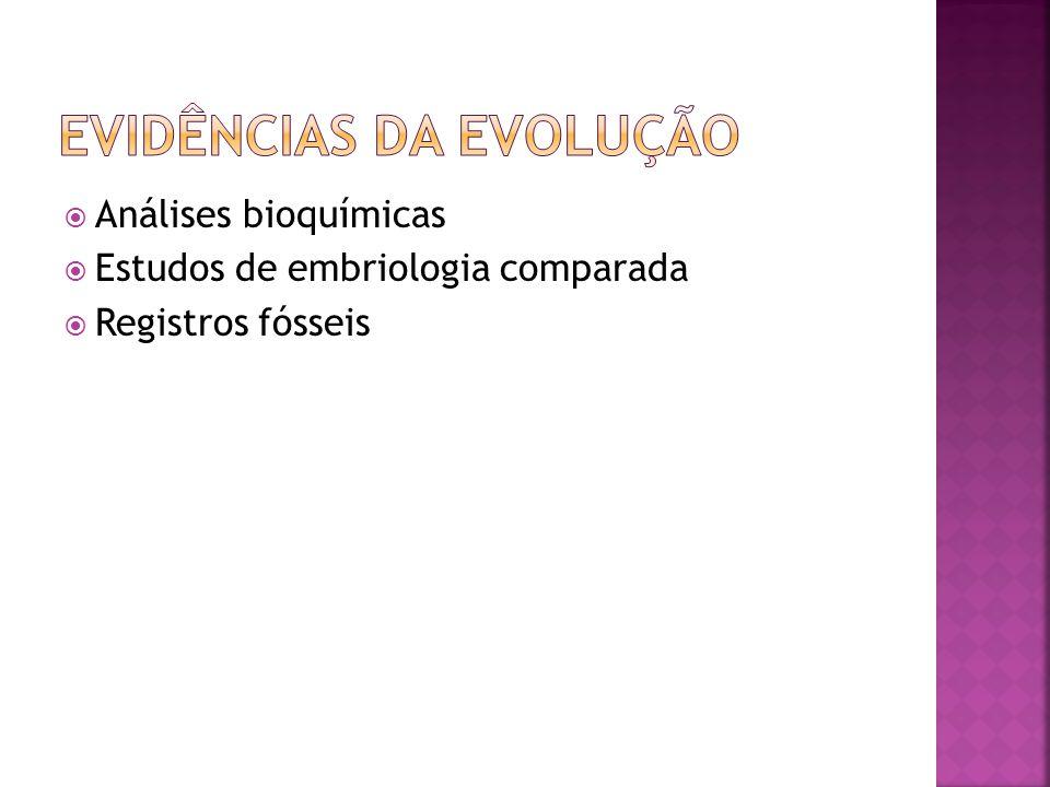 Análises bioquímicas Estudos de embriologia comparada Registros fósseis