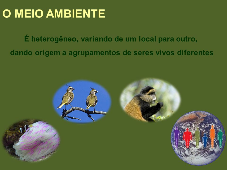 O MEIO AMBIENTE É heterogêneo, variando de um local para outro, dando origem a agrupamentos de seres vivos diferentes