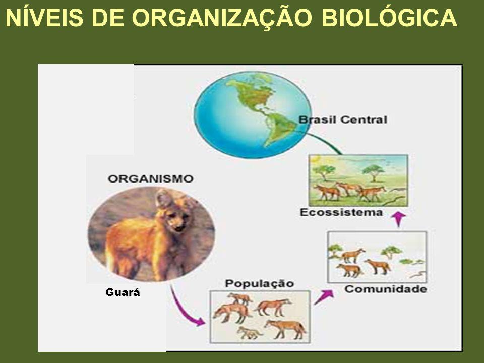 Guará NÍVEIS DE ORGANIZAÇÃO BIOLÓGICA