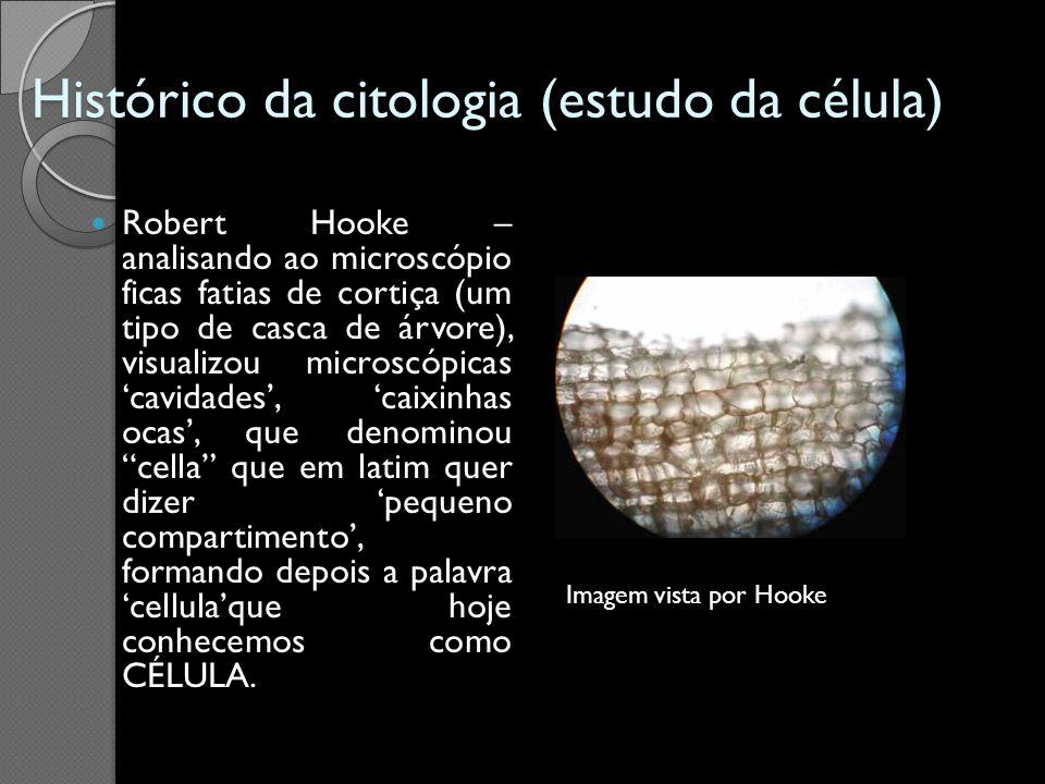 Histórico da citologia (estudo da célula) Robert Hooke – analisando ao microscópio ficas fatias de cortiça (um tipo de casca de árvore), visualizou mi