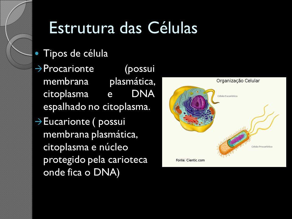 Estrutura das Células Tipos de célula Procarionte (possui membrana plasmática, citoplasma e DNA espalhado no citoplasma. Eucarionte ( possui membrana