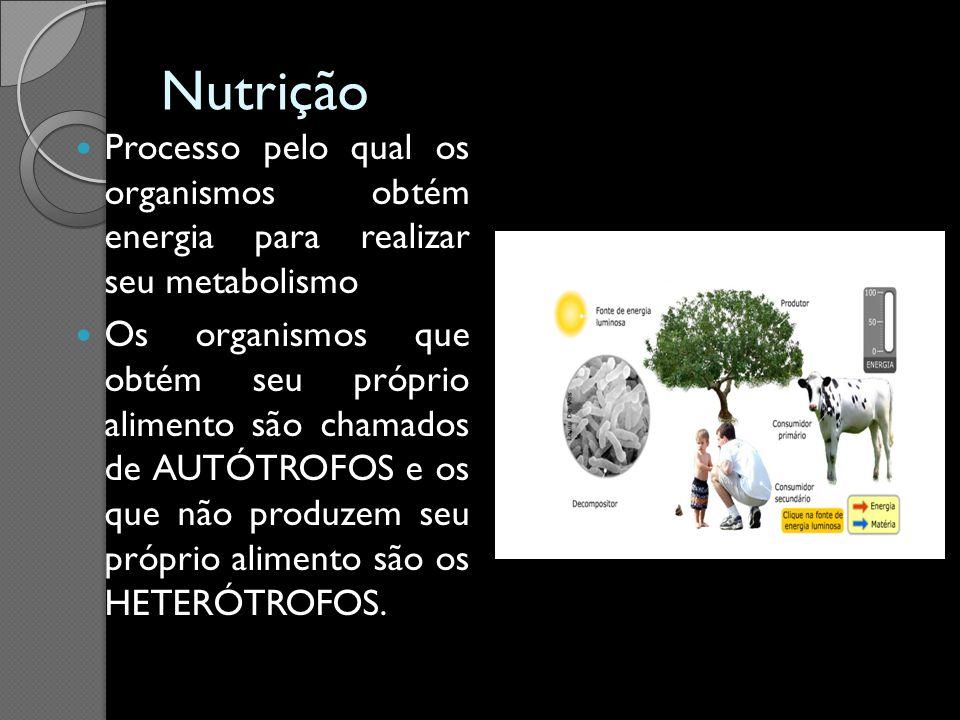 Nutrição Processo pelo qual os organismos obtém energia para realizar seu metabolismo Os organismos que obtém seu próprio alimento são chamados de AUT