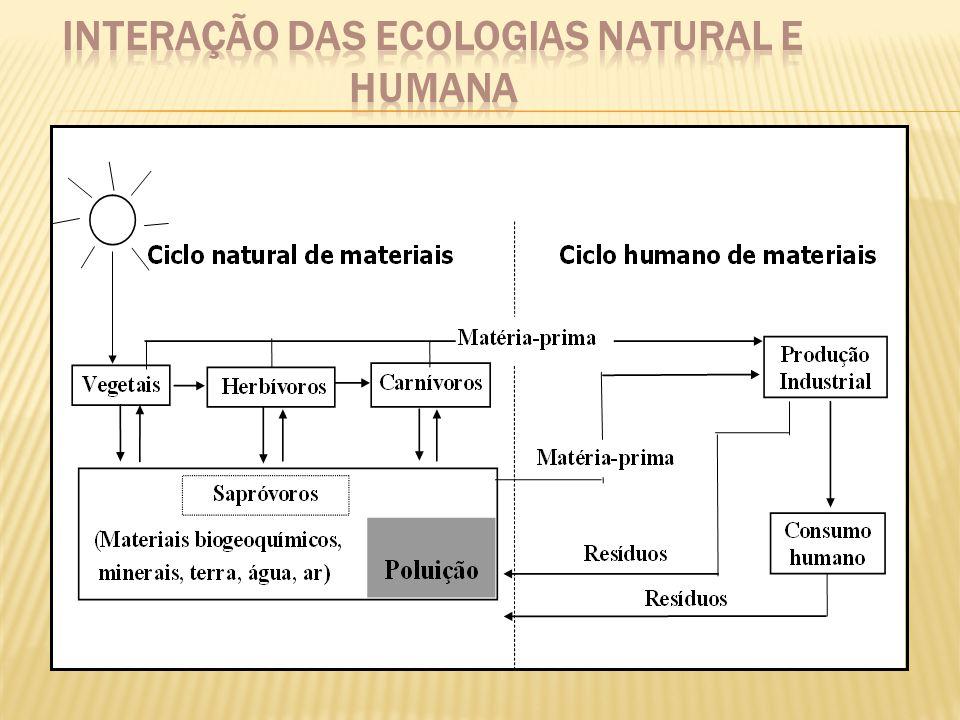 Alta densidade demográfica Relação desproporcional entre ambiente construído e ambiente natural Alteração significativa da diversidade biológica nativa com a retirada das florestas e importação de espécies vegetais e animais Impermeabilização do solo e alteração dos cursos de água