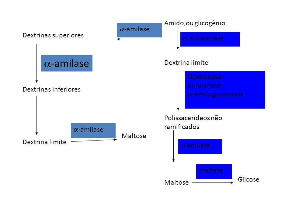 Dextrinas superiores Dextrinas inferiores Dextrina limite -amilase Maltose Amido,ou glicogênio Dextrina limite Polissacarídeos não ramificados Maltose