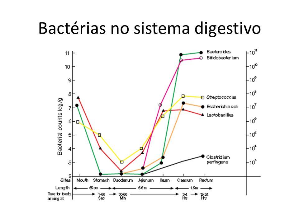 Outros componentes Enzimas microbianas (urease, fosfatases ácidas) Componentes sangüíneos (ácido úrico, alfa, beta e gamaglobulinas) Produtos de excreção (medicamentos) Produtos de atividade microbiana (produtos de putrefação) – mau hálito