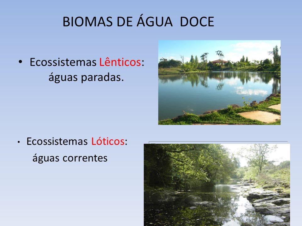 Ecossistemas Lênticos: águas paradas. BIOMAS DE ÁGUA DOCE Ecossistemas Lóticos: águas correntes