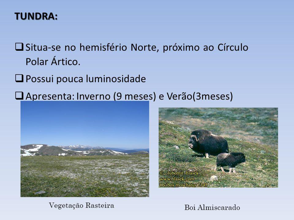 Vegetação Rasteira Boi Almiscarado TUNDRA: Situa-se no hemisfério Norte, próximo ao Círculo Polar Ártico. Possui pouca luminosidade Apresenta: Inverno