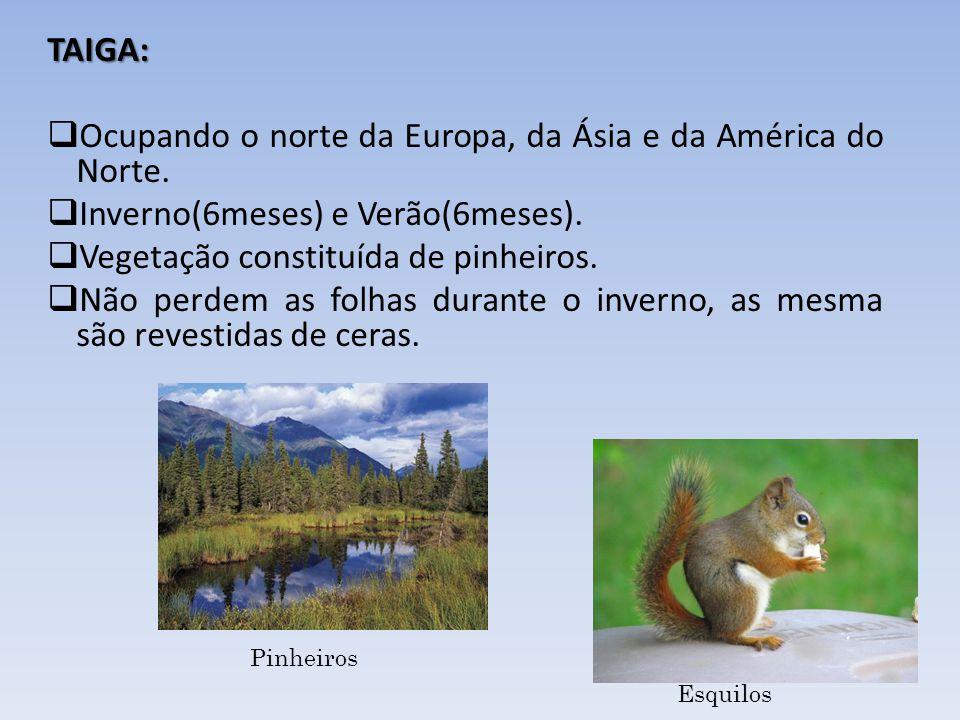 TAIGA: Ocupando o norte da Europa, da Ásia e da América do Norte. Inverno(6meses) e Verão(6meses). Vegetação constituída de pinheiros. Não perdem as f