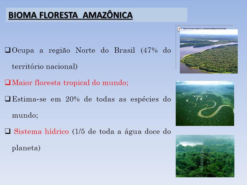 BIOMA FLORESTA AMAZÔNICA Ocupa a região Norte do Brasil (47% do território nacional) Maior floresta tropical do mundo; Estima-se em 20% de todas as es