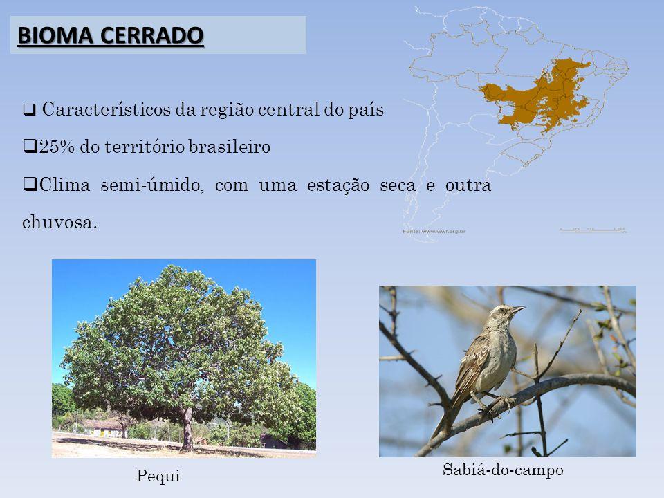 Característicos da região central do país 25% do território brasileiro Clima semi-úmido, com uma estação seca e outra chuvosa. BIOMA CERRADO Pequi Sab