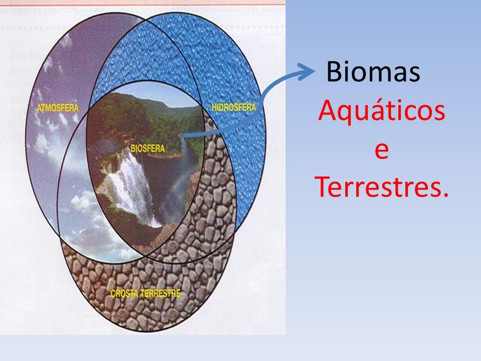 Biomas Aquáticos Divide-se em: Água Salgada(Talássicos) Água doce (Límnicos)