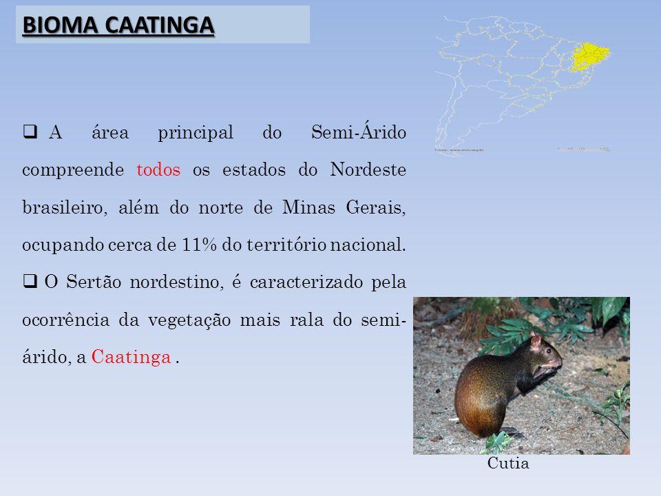 A área principal do Semi-Árido compreende todos os estados do Nordeste brasileiro, além do norte de Minas Gerais, ocupando cerca de 11% do território