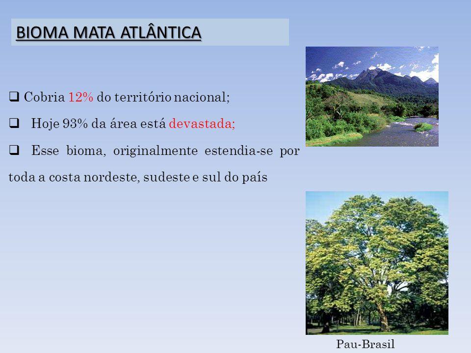 Cobria 12% do território nacional; Hoje 93% da área está devastada; Esse bioma, originalmente estendia-se por toda a costa nordeste, sudeste e sul do