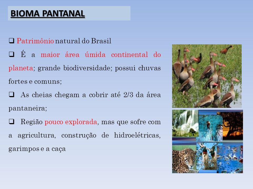 Patrimônio natural do Brasil É a maior área úmida continental do planeta; grande biodiversidade; possui chuvas fortes e comuns; As cheias chegam a cob