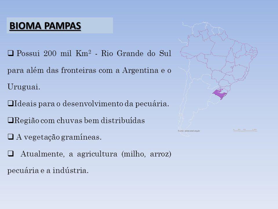 Possui 200 mil Km 2 - Rio Grande do Sul para além das fronteiras com a Argentina e o Uruguai. Ideais para o desenvolvimento da pecuária. Região com ch