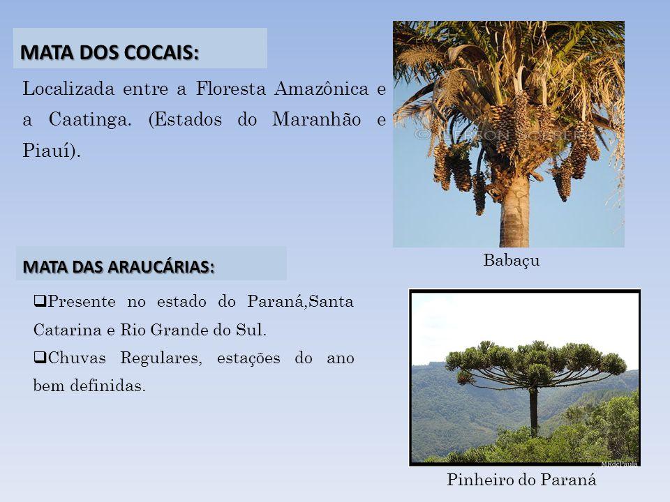 Localizada entre a Floresta Amazônica e a Caatinga. (Estados do Maranhão e Piauí). Presente no estado do Paraná,Santa Catarina e Rio Grande do Sul. Ch