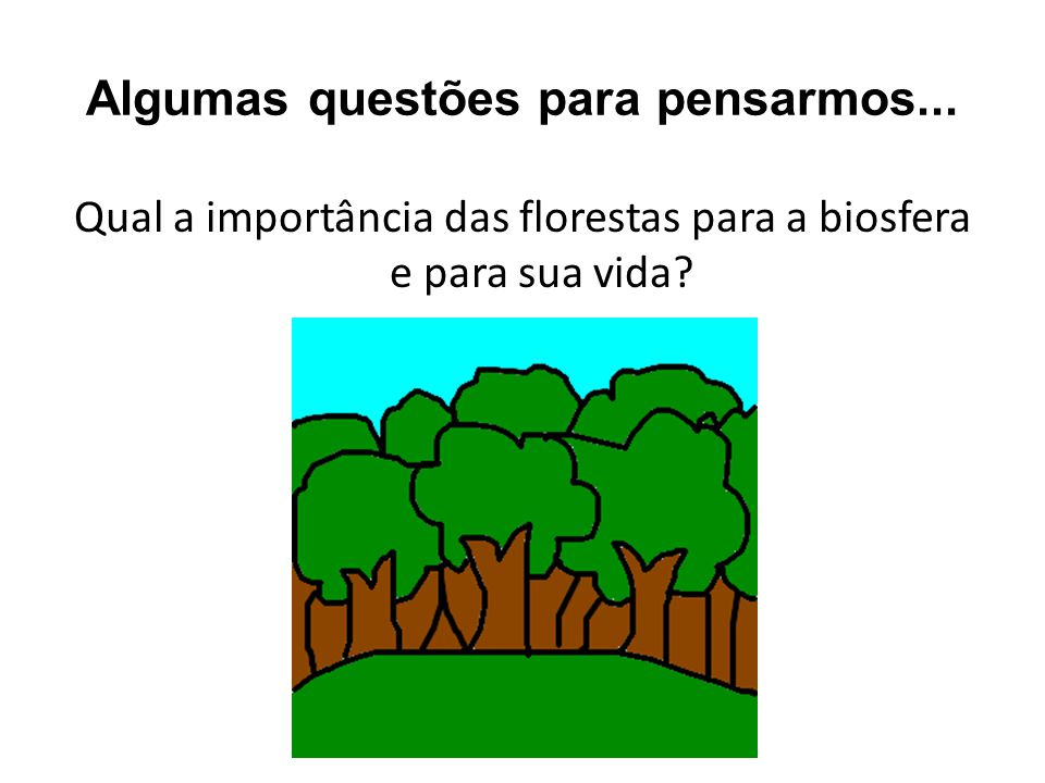 Algumas questões para pensarmos... Qual a importância das florestas para a biosfera e para sua vida?