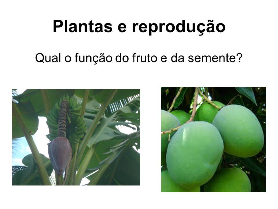 Qual o função do fruto e da semente? Plantas e reprodução
