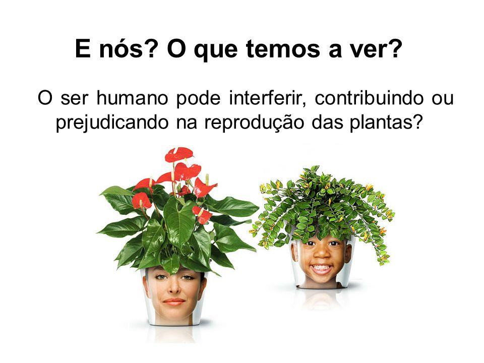 E nós? O que temos a ver? O ser humano pode interferir, contribuindo ou prejudicando na reprodução das plantas?