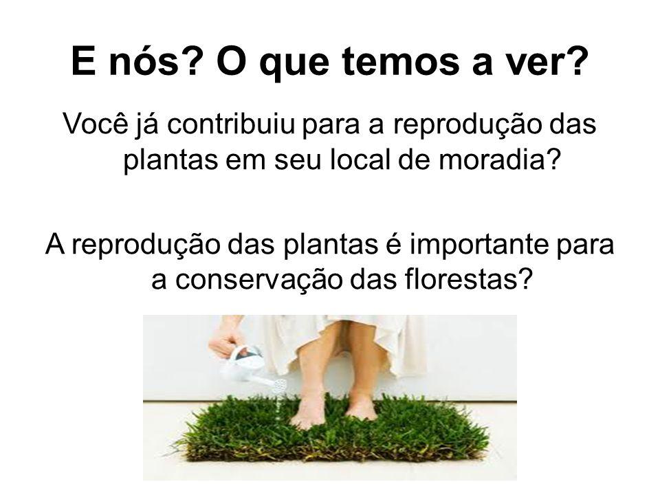 E nós? O que temos a ver? Você já contribuiu para a reprodução das plantas em seu local de moradia? A reprodução das plantas é importante para a conse
